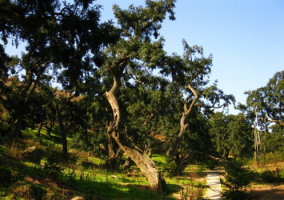 珍稀资源护肤品圣榧欧,原料来自国家级农业遗产树种